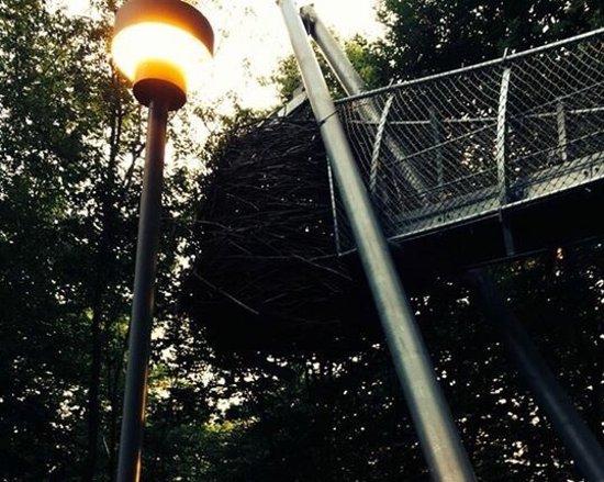 Morris Arboretum: photo5.jpg
