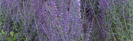 Morris Arboretum: photo6.jpg
