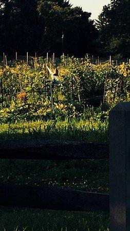 Morris Arboretum: photo8.jpg