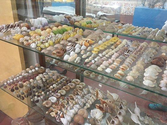 Sea Shell City Museo de Conchas: photo2.jpg