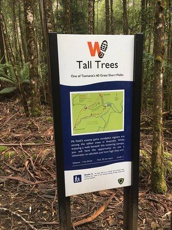 Kingston, Australien: Mt. Field National Park walk