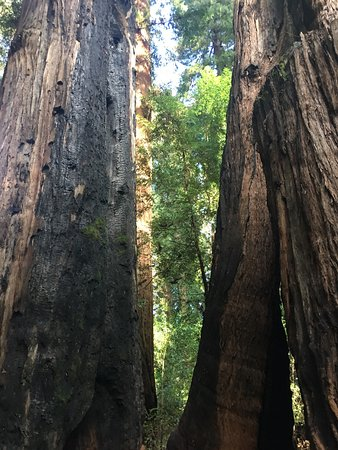 Henry Cowell Redwoods State Park: photo3.jpg