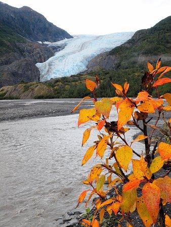 Kenai Fjords National Park, AK: Exit Glacier with a splash of color