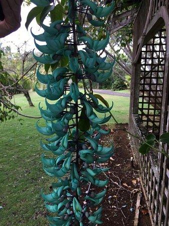 Na Aina Kai Botanical Gardens: IMG954831_large.jpg