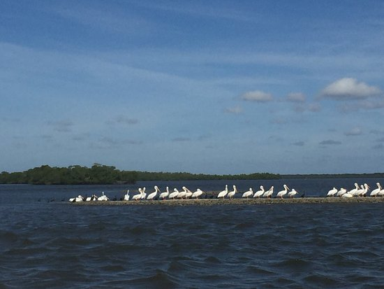 Everglades Day Safari: photo2.jpg
