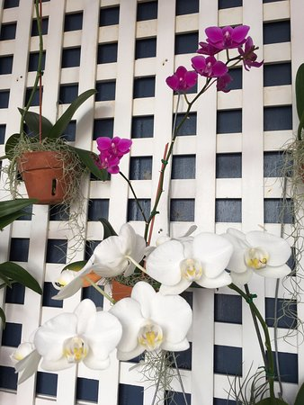 Marquesa Hotel: A wall of beautiful orchids in the pool area!