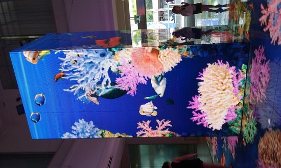The Reef Casino: Interactive led display in foyer of reef casino...amazing!!