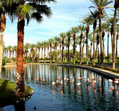 Marriott's Desert Springs Villas II: Flamingos in JW Marriott Hotel lagoon.