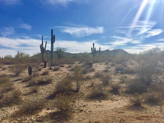 Queen Creek, AZ: photo7.jpg