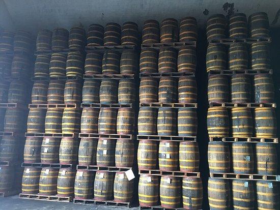 Brugal Rum Center: photo1.jpg