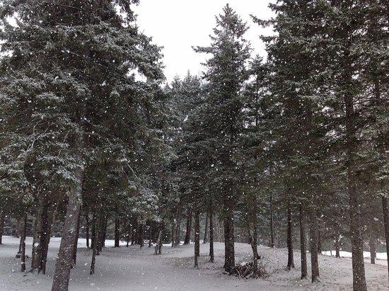 Van Hoevenberg Lodge & Cabins Photo