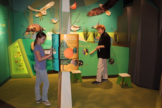 Corydon, IN: Hands on fun in the natural history gallery