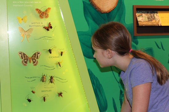 Corydon, IN: Up close with insects