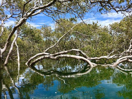 Hawks Nest, Australia: photo1.jpg
