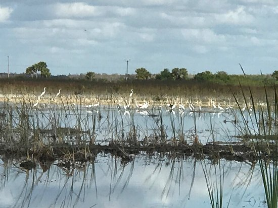 Capt Mitch's - Everglades Private Airboat Tours: photo1.jpg