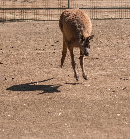 Frontier Photographic Safaris: Hopping Kangaroo at Featherland Wildlife Reserve