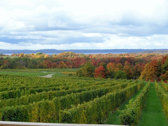 Chateau Grand Traverse Winery: view of the vineyard, Chateau Grand Traverse in October