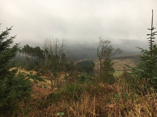 Galloway Forest Park, UK: photo4.jpg