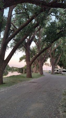 Ellis, KS: Beautiful trees