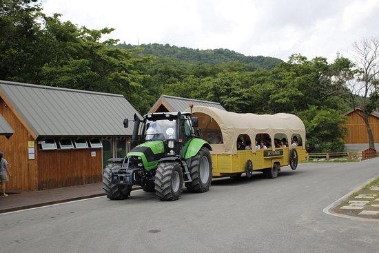 Pyeongchang-gun, Güney Kore: train(tractor-trailer)
