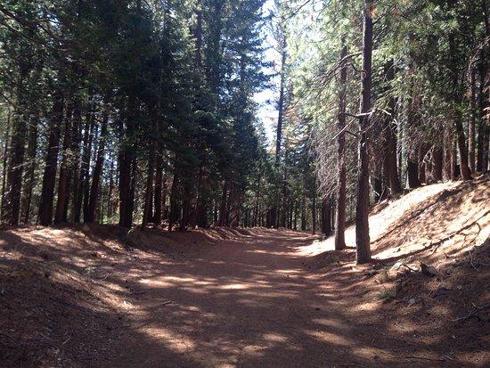 Evergreen Lodge at Yosemite: Trilha próxima ao Hotel, dentro do Yosemite Park