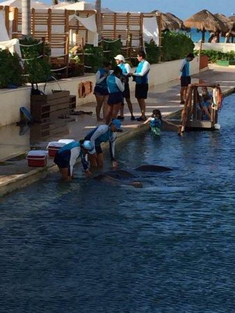 Delphinus Punta Cancun: photo0.jpg