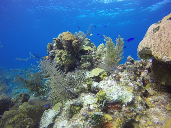 Turneffe Island, Belize: An amazing diving destination!