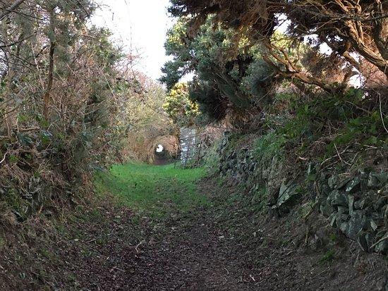 Ballynoe Stone Circle : photo2.jpg