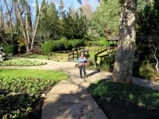 Healdsburg, CA: In Farrari Carano gardens by Cork Oak tree.