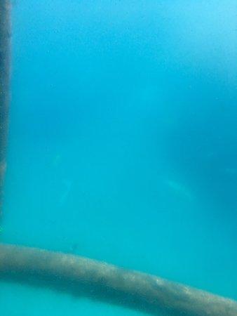 Yellow Submarine Boat Tour : photo0.jpg