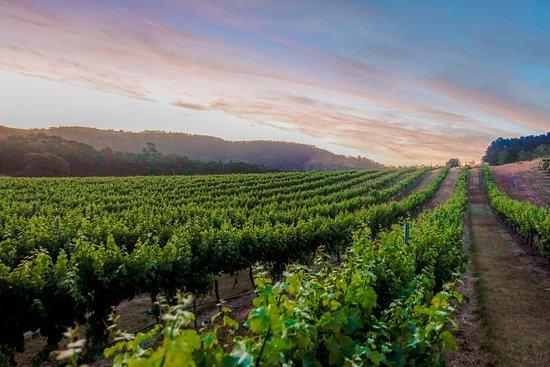 Taltarni Vineyards