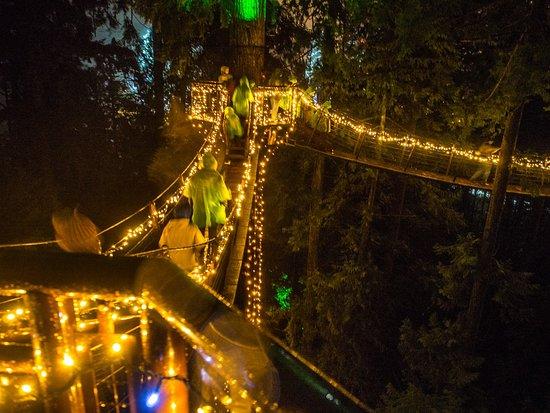 """Nord-Vancouver, Canada: Tree Top """"Ewok"""" walk"""