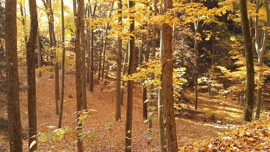 Belvedere Inn & Restaurant: Fall Foliage in the Woods near the Belvedere Inn 11/2016