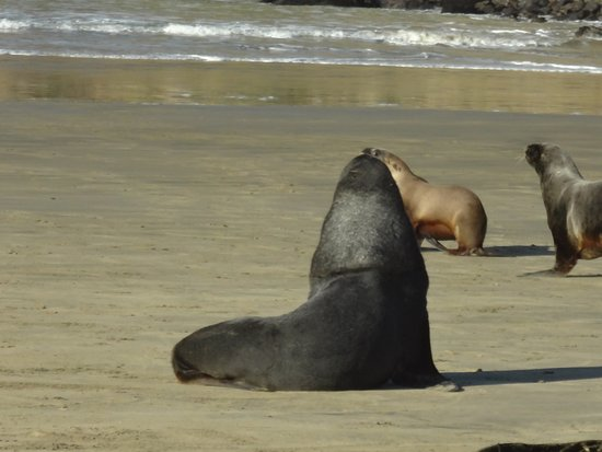 Southland Region, New Zealand: sea lions