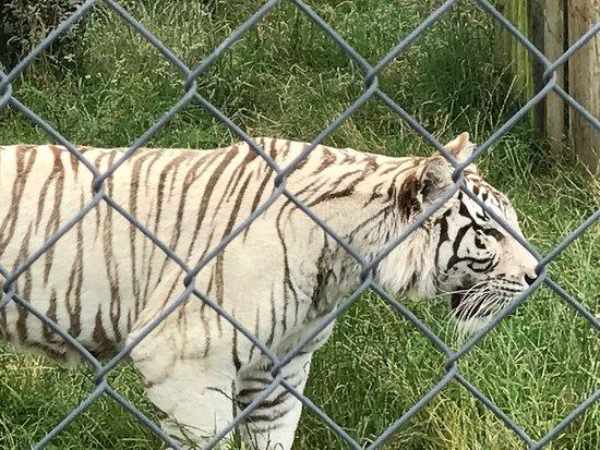Pouakai Zoo: photo3.jpg
