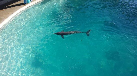 Dolphinaris Cancun : 20161221_155105_large.jpg