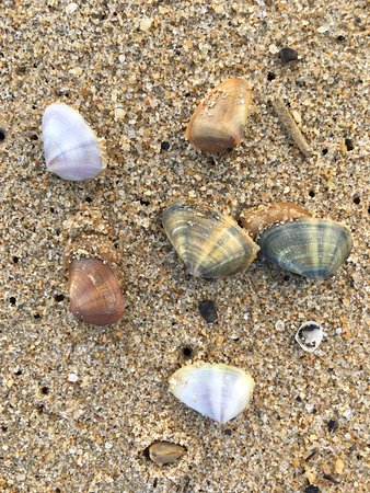好萊維海灘照片