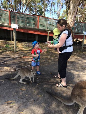 Grantville, ออสเตรเลีย: My daughter sharing kangaroo feed with her son to give away. Little sister is enjoying her pouch