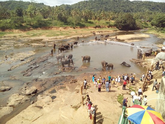 Kegalle, Sri Lanka: Elephants enjoying a dip...
