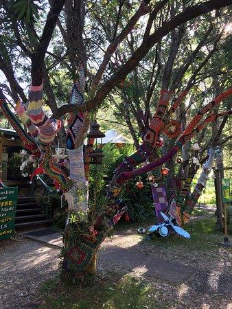 Killarney, Australien: Our camping trip to Queen Mary Falls Caravan Park.