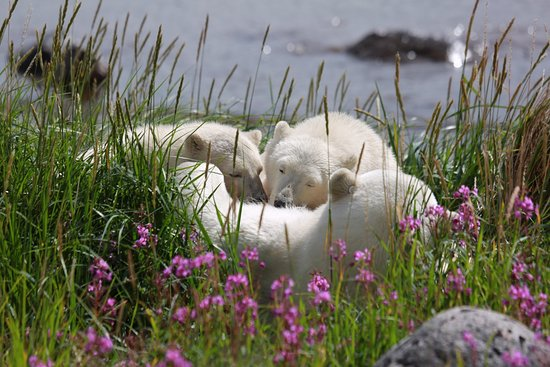 Seal River, Canadá: photo0.jpg