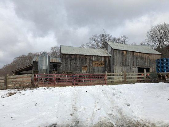 Sugarbush Farm: photo0.jpg