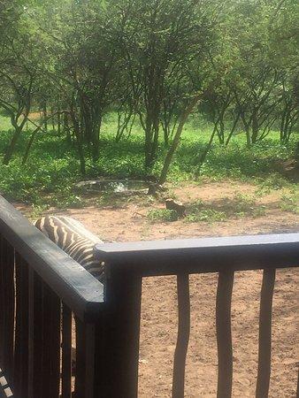Marloth Park, Sydafrika: photo2.jpg