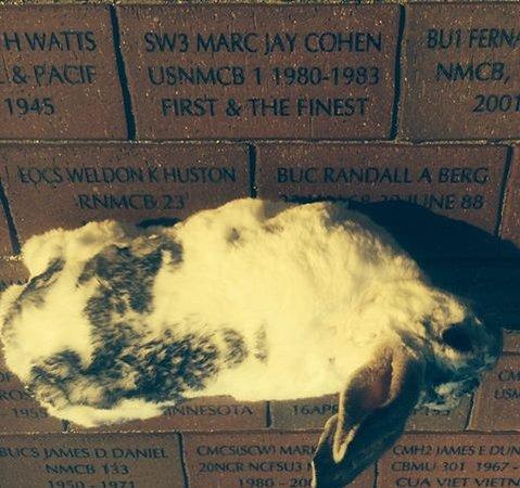 "Port Hueneme, CA: My pet rabbit ""Narvik"" near my donation brick......"