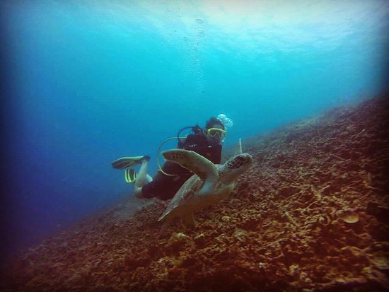 Blue Marlin Dive Gili Trawangan: Swimming with the Turtles :)