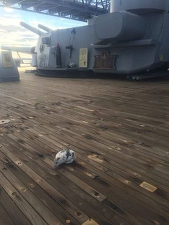 "Battleship Cove: My pet rabbit ""Narvik"" near rear 16-inch gun turret on USS MASSACHUSETTS (BB59)....."