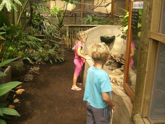 Klapmuts, Sudáfrica: Kids observing the iguanas!