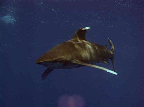 Elphinstone Reef Photo