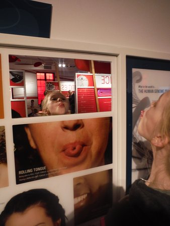 Buffalo Museum of Science: Dominant and Recessive Genes
