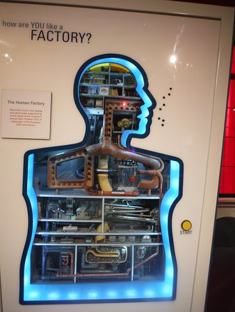 Buffalo Museum of Science: Awesome body factory exhibit